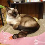 小倉北区片野にある猫カフェ、五匹の猫へと行った!