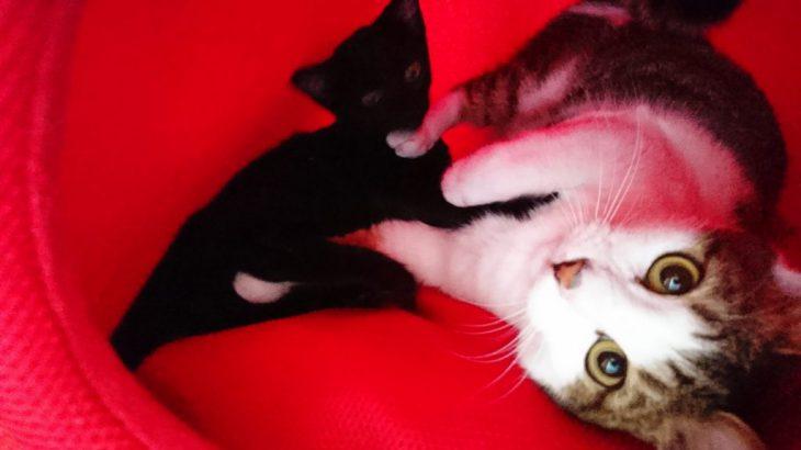 猫カフェの猫ちゃんたちにモンプチをあげた!