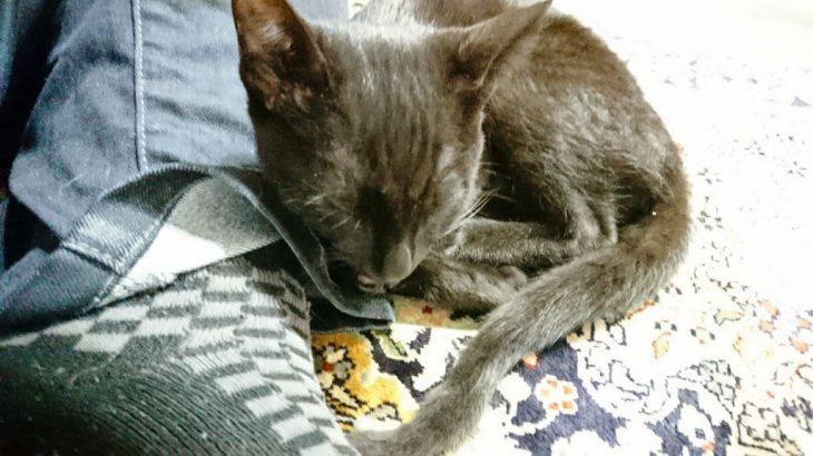 じゃれ猫ブンブン トンボで猫ちゃんたちと遊んだ!