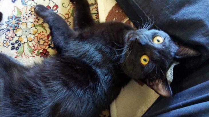 猫カフェに行ったら猫ちゃんが凄く甘えてきた!