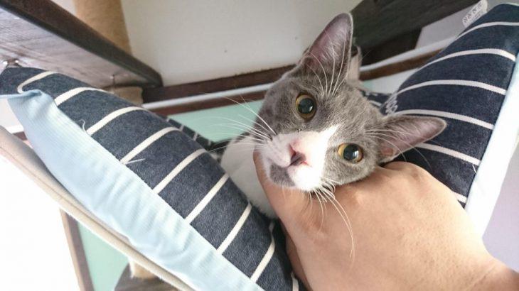 猫カフェに新しく来た二匹の猫ちゃんに会いに行った!