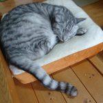 北九州市の猫カフェまとめ