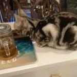 門司区の猫カフェ、Cat  Mon 美cafeに行った!