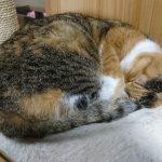 古賀市にある猫カフェ、Cafe Gattoへ行った!