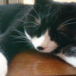 小倉北区片野にある猫カフェ、五匹の猫へと行った! 3回目