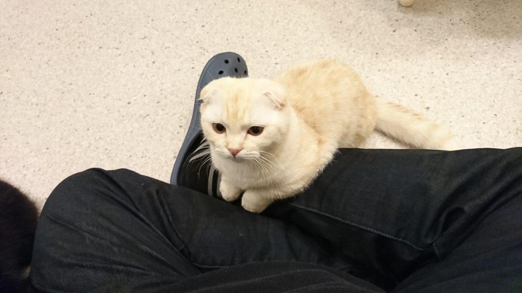 門司区の猫カフェ、Cat Mon 美cafeに行った! 4回目 今回も子猫の写真がありますよ!