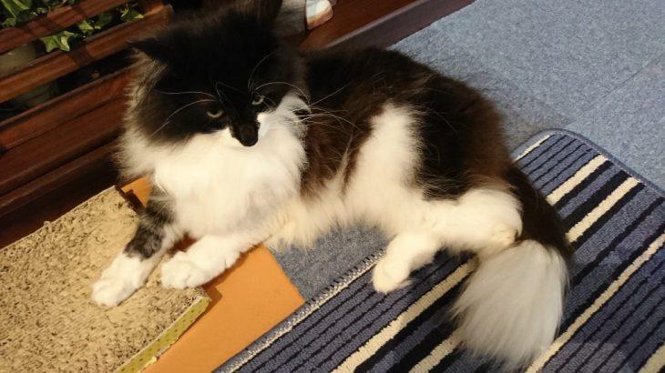 下関市にある猫カフェ、「猫と本 Miaw」へと行ってきた!