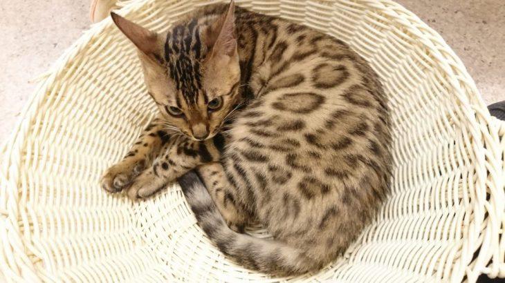 猫カフェに行ったらネコちゃんたちのご飯タイムが始まった!