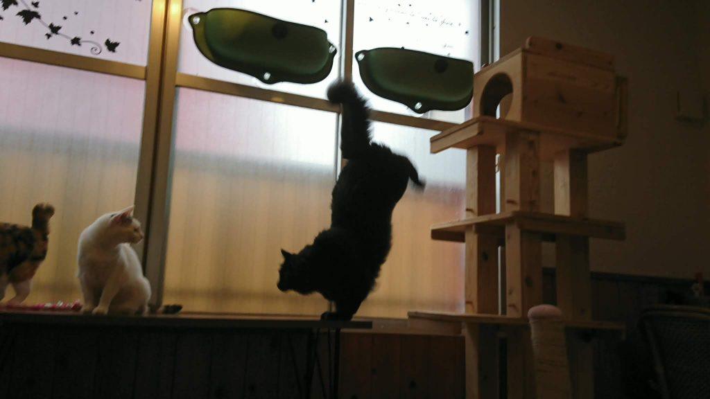 猫カフェでネコちゃんたちにCIAOちゅ〜るをあげた!
