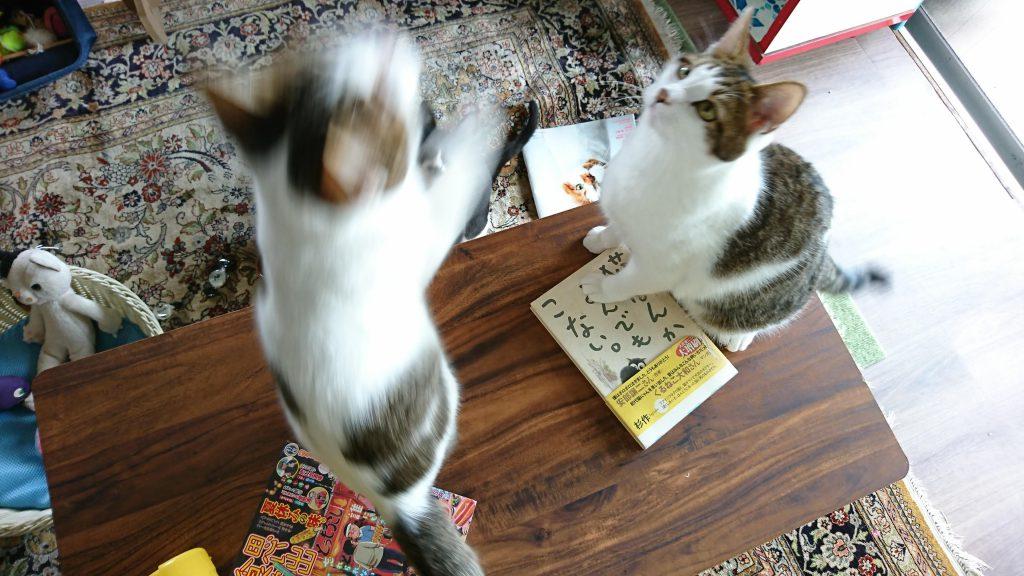 ペッツルートの「カシャカシャじゃれる! 小鳥」で猫ちゃんたちと遊んだ!