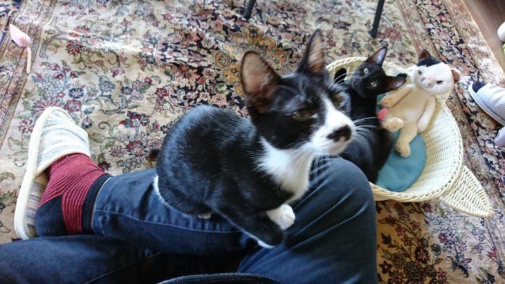 時間がポッカリ空いたので猫カフェへ行った!