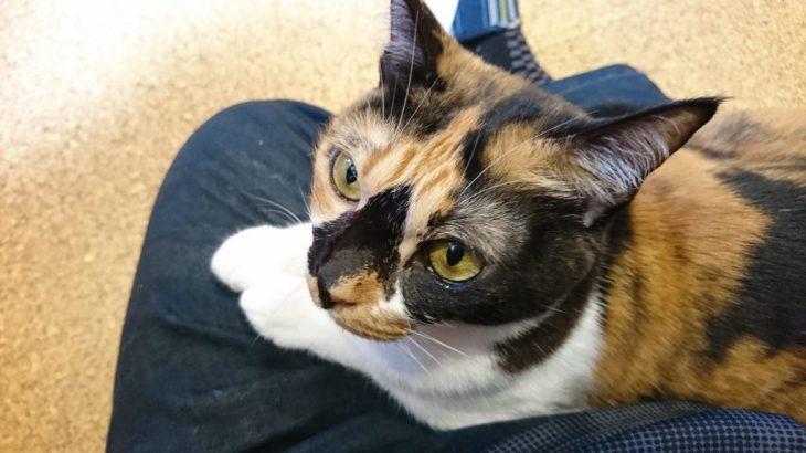 小倉北区にある猫カフェ、五匹の猫のチェリーちゃんに会いに行った!