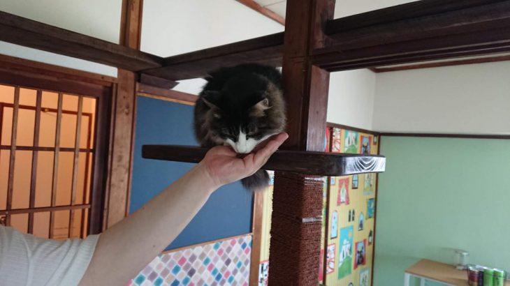 猫カフェで猫にモテモテになる6つの方法