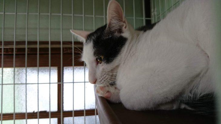 小倉北区にある猫カフェ、猫とカフェ PUSAに行った!