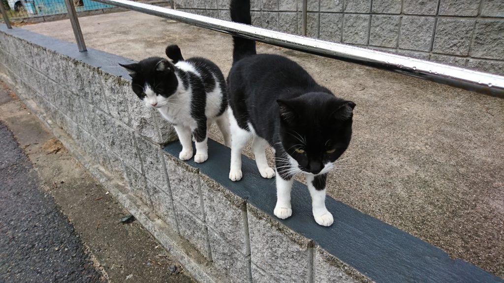 小倉北区にある猫の島、藍島へと行った!