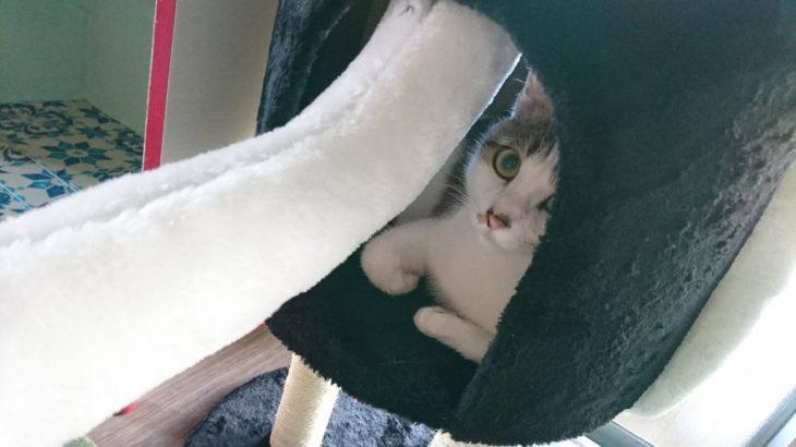 猫ちゃんにCIAOちゅ~るのまぐろ&まぐろ節を上げてみた!