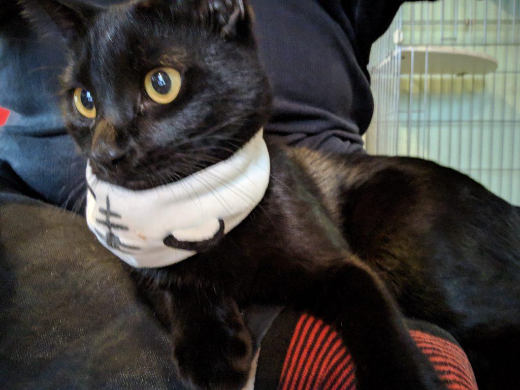 猫カフェに行ったら猫ちゃんが可愛い被り物をしていた!