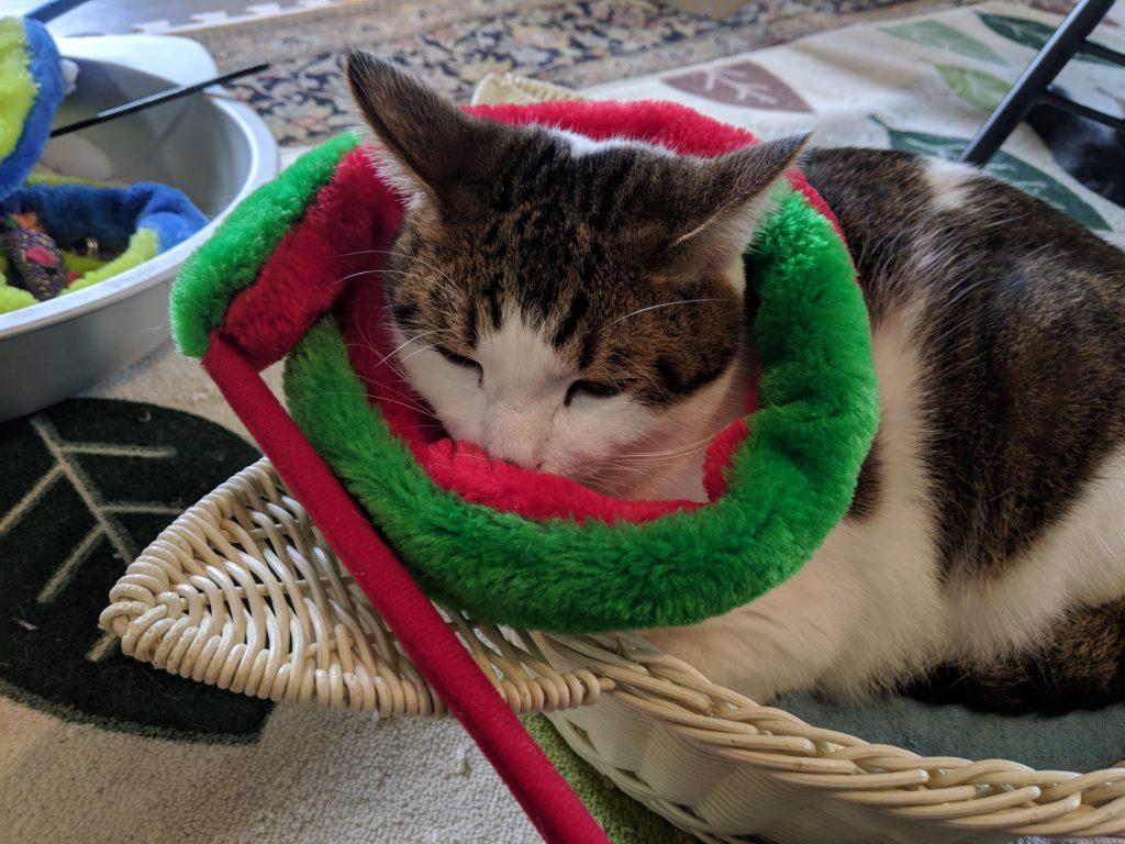 ねこはちの猫ちゃんたちが可愛すぎた!