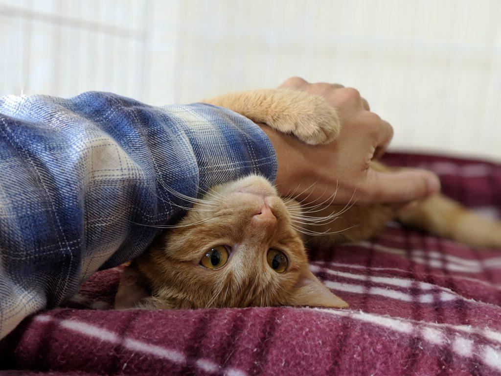 戸畑区にある保護猫カフェ、みどりのしっぽに行ったらかわいい子がいた!