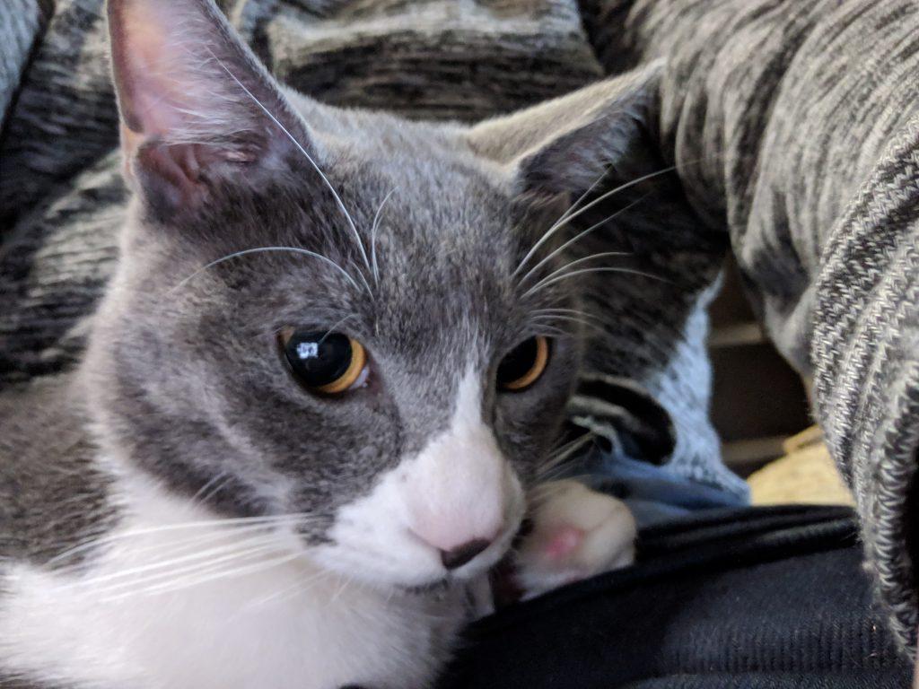 猫カフェに行ったら猫ちゃんがヒザの上に乗ってきた!