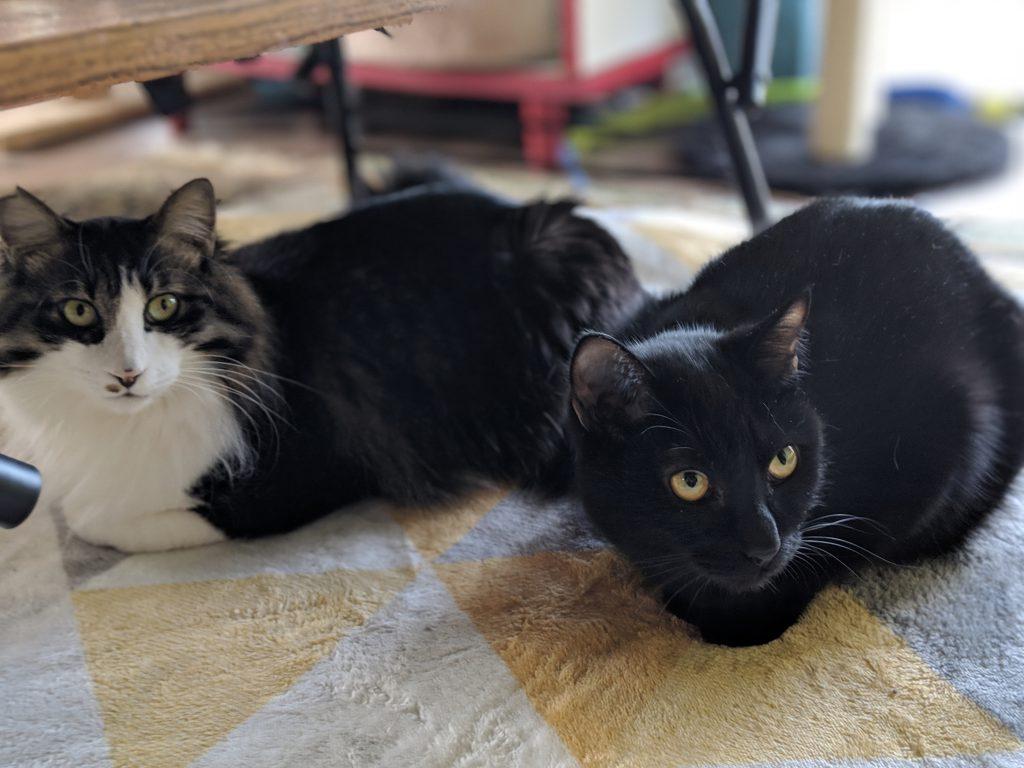 猫カフェで写真を撮ったらなかなかいい絵が撮れた!