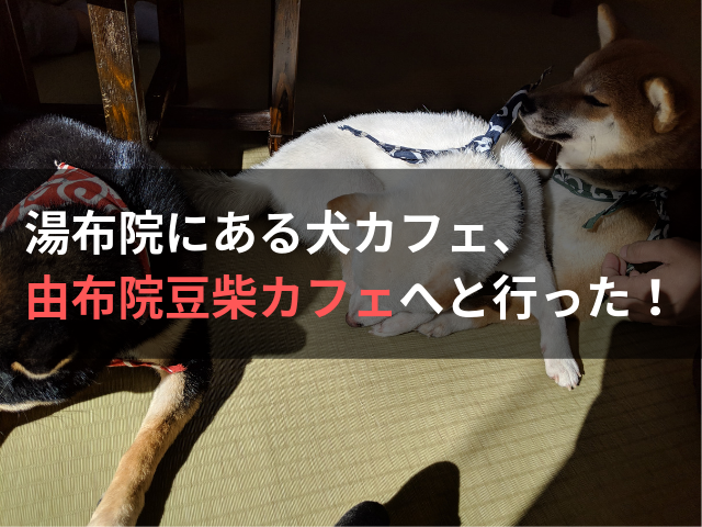 湯布院にある犬カフェ、由布院豆柴カフェへと行った!