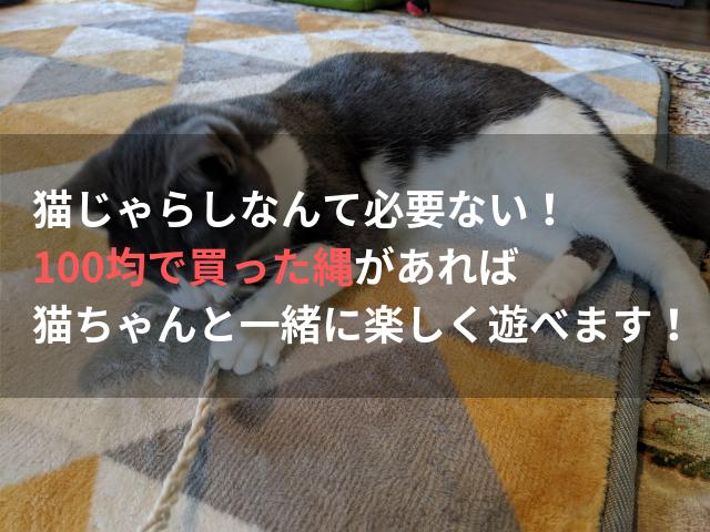 猫じゃらしなんて必要ない! 100均で買った縄があれば猫ちゃんと一緒に遊べます!