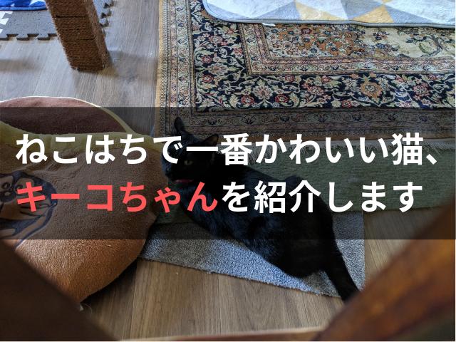 ねこはちで一番かわいい猫、キーコちゃんを紹介します