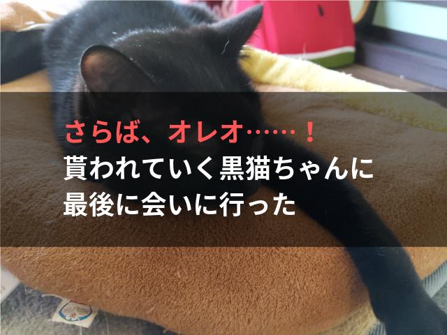 さらば、オレオ……! 貰われていく黒猫ちゃんに最後に会いに行った