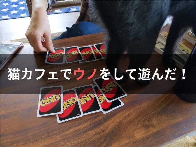 猫カフェでウノをして遊んだ!