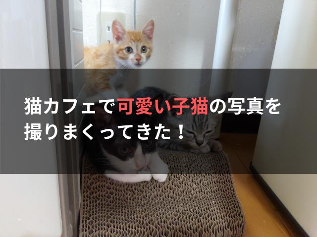 猫カフェで可愛い子猫の写真を撮りまくってきた!