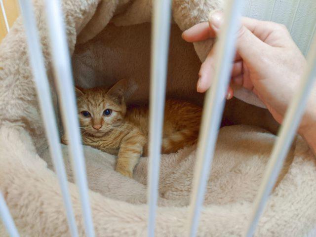 トラ猫の子猫に会いに行った!