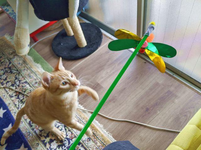 セリアのじゃれっこ棒(ハチ・トンボ)で猫ちゃんと遊んでみた!