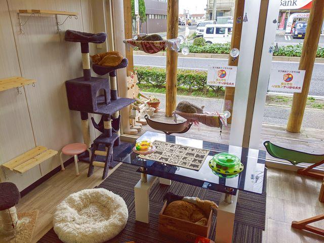 門司区に新しくできた保護猫(犬)カフェ、Lien(りあん)へと行った!