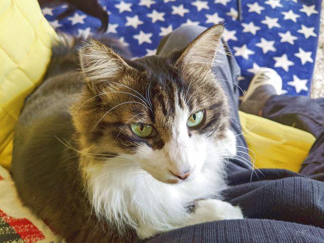 猫カフェのソファに座ったら猫ちゃんがヒザの上に乗ってきた!