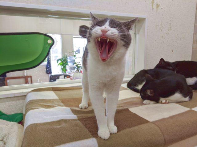 猫カフェでめっちゃ甘えられた!