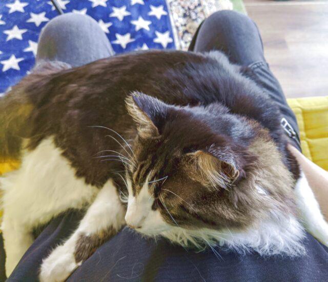 久しぶりに猫カフェに行った!