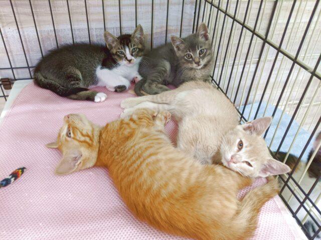 猫カフェの子猫たちに会いに行った!