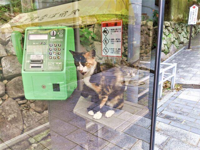 唐津城で猫ちゃんと出会った!