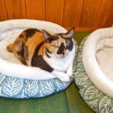 五匹の猫のジャムティーが凄くおいしかった!