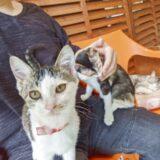 りあんの肩乗り子猫、二匹目が現れた!