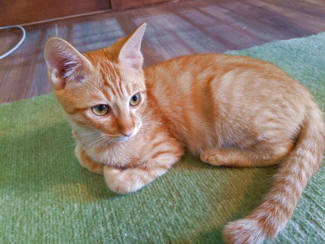 猫カフェで子猫に足を齧られた!