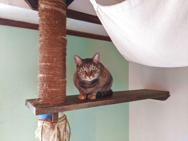 猫カフェの噂の甘えん坊の子猫に会いに行った! そしたら……
