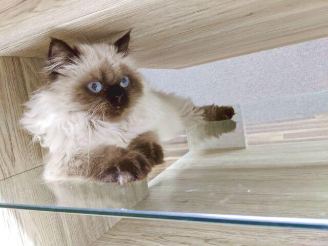 下関市に新しくできた猫カフェ、空陸家へ行ってきた!