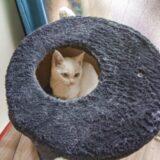 猫カフェでフェネック(笑)を見つけた!