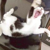 りあんの美人猫ちゃんのめっちゃブサイクな写真が撮れた(笑)