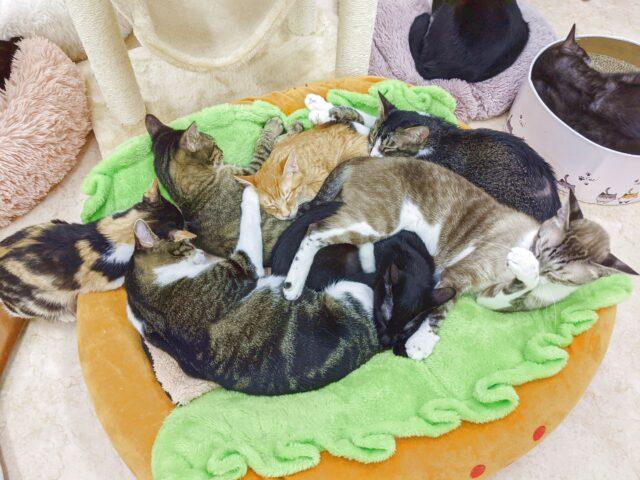 門司区にある猫カフェ、りあんがリニューアルオープン!
