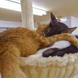 りあんの猫ちゃんたちもだいぶ環境に慣れたようです