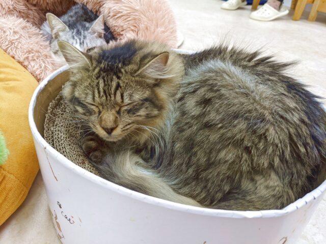 保護猫カフェは出会いと別れの場……