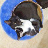 猫はヒザの上で丸くなる